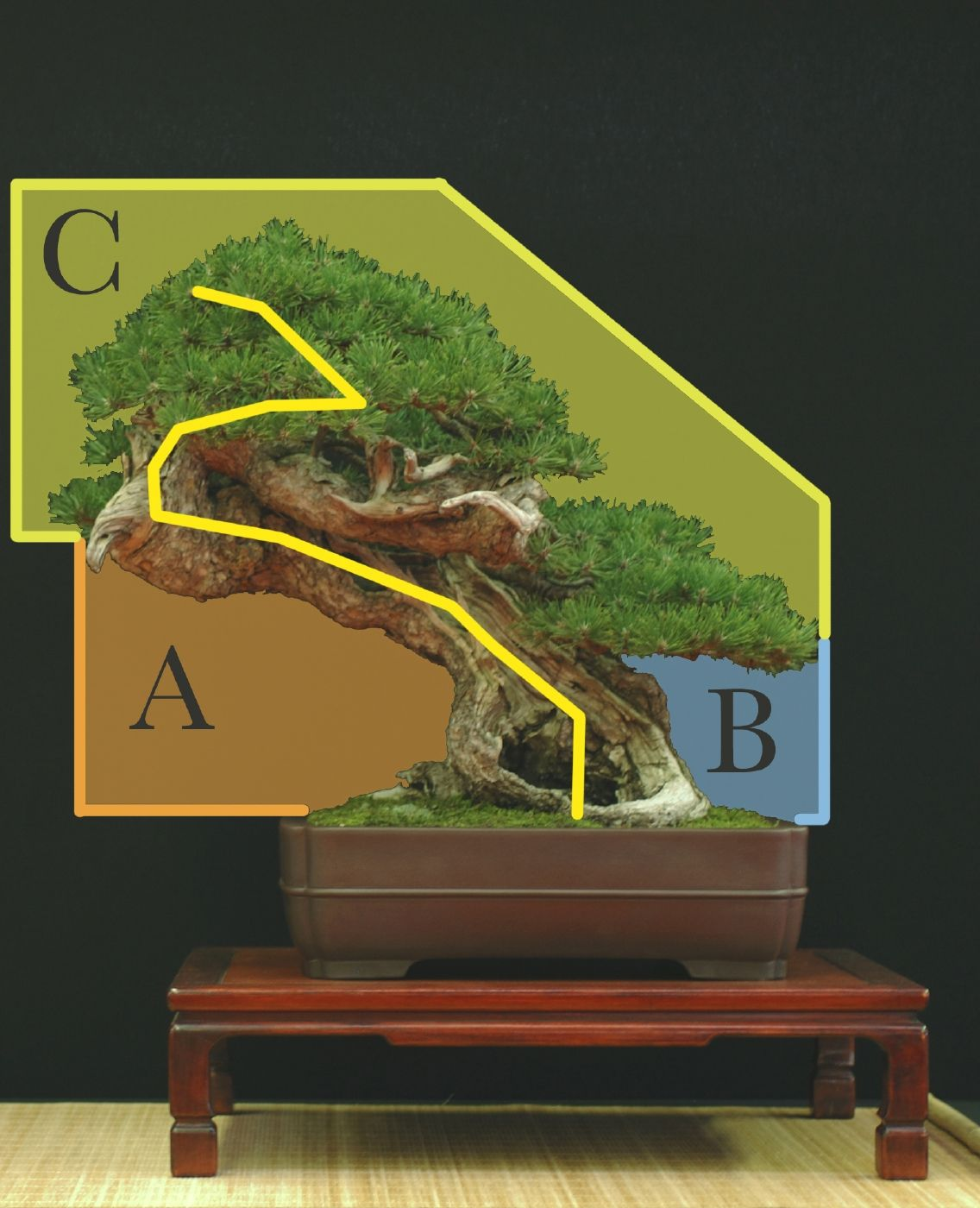 styles esth tique et formation des bonsa le forum des. Black Bedroom Furniture Sets. Home Design Ideas