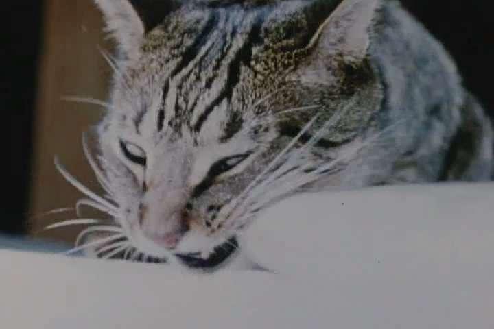 http://img20.imageshack.us/img20/6120/catfood2.jpg